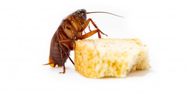 Empresas de control de plagas de cucarachas en Rivas Vaciamadrid