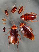Empresas control de plagas de cucarachas en Torrejónde Ardoz