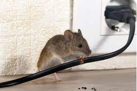 Empresas de control de plagas de roedores en Tres Cantos
